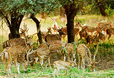 Wildlife in Hyderabad