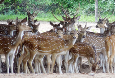 Wildlife in Karimnagar